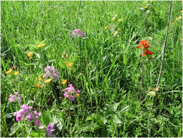 ecological stoichiometry of grassland insects